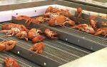 Разведение раков в домашних условиях, пруду, аквариуме как бизнес