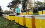 Пчеловодство как бизнес: выбор места для пасеки, условия содержания пчел, ориентировочный бизнес-план
