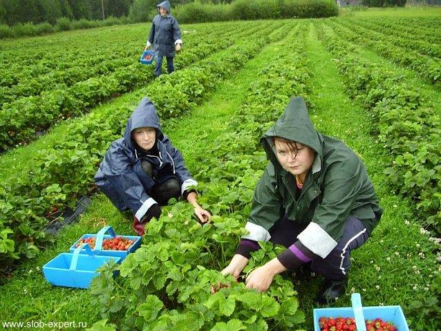 Сезонная работа и сезонный трудовой договор с работником в 2020 году