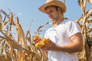 Должностная инструкция агронома в сельском хозяйстве
